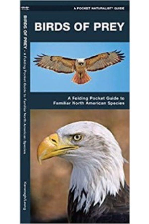 Pocket Guide To Birds Of Prey Familiar North American Species Sjma